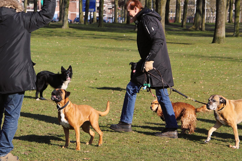 Nii nagu hollandlased on jalgratta-rahvas, jäi mulje, et nad on ka koera-rahvas. Hirmus palju pitsusid jäi hommikuses pargis silma.
