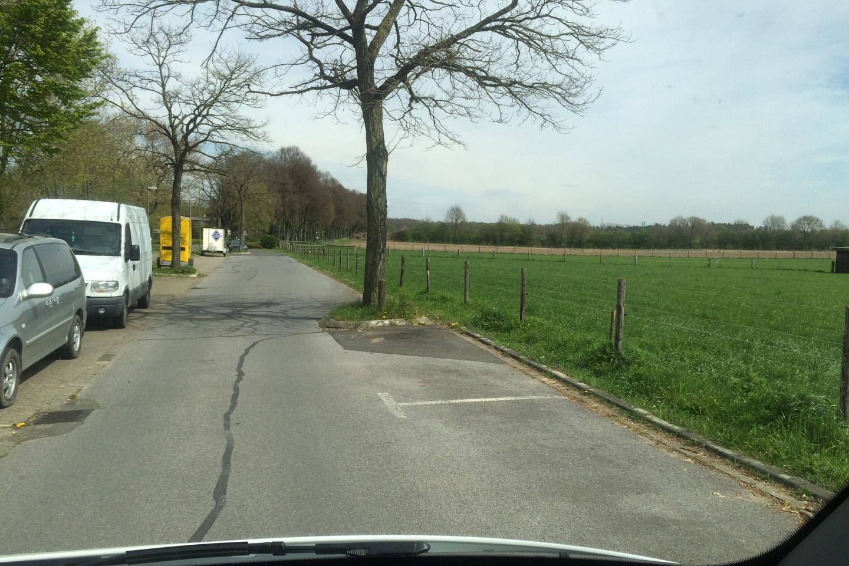 Selline omapärane slaalomi sõitmine käis - puud istutatud sõiduteele