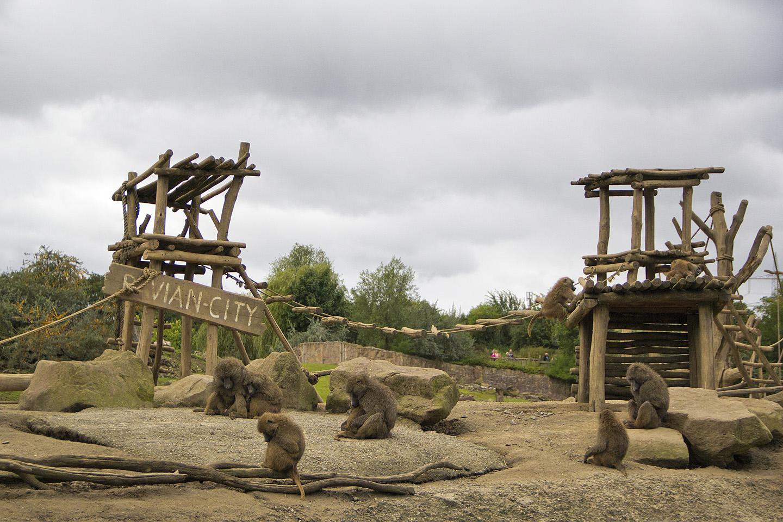 Stiilne ahvikeste saar jäi paaditeekonnale. Pilt tehtud paadist.