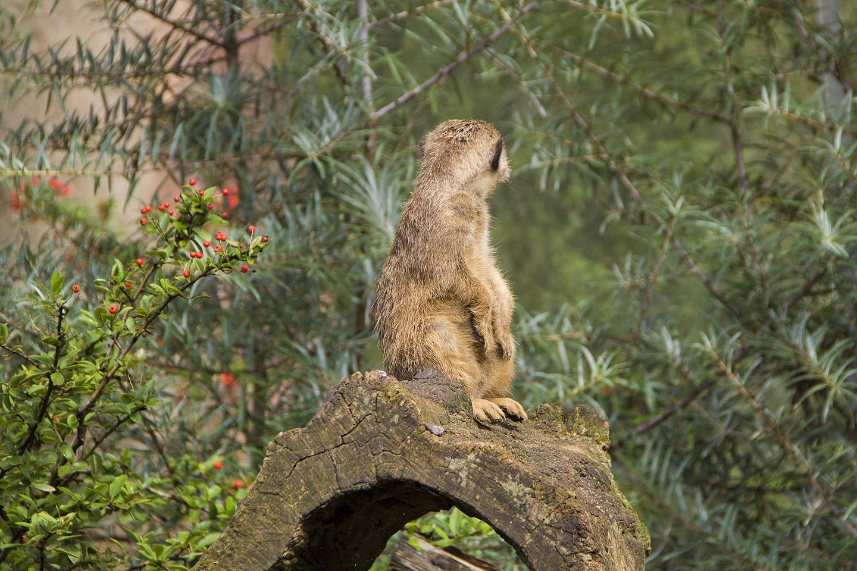 ...ja üks vapper on alati hoolsalt valvel ning hoiab ümbruskonnal silma peal.