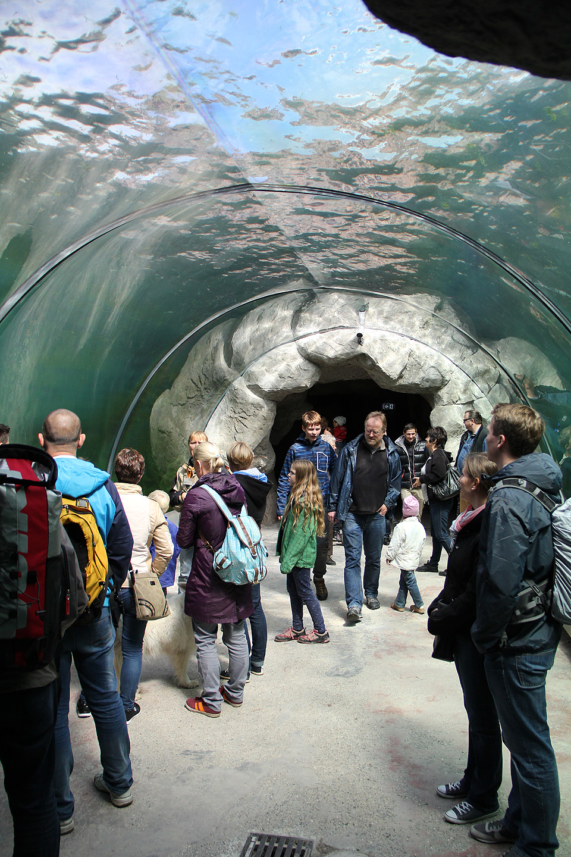 Hülgeid sai jälgida nii maa peal, maa all koobastes kui ka klaastunnelis. Väga mõistlik lahendus, kuna enamus actionit käis just vee all.
