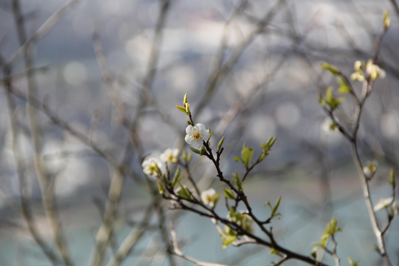 Kevad tuleb, kevad tuleb.